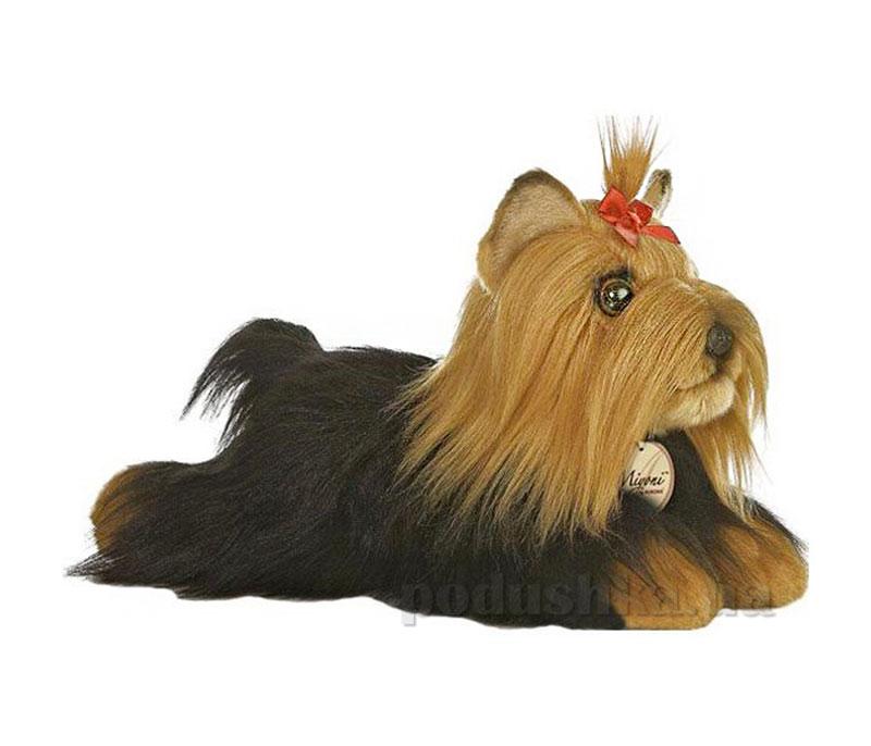 Собачка Йоркширский терьер Aurora