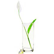 Декоративная ваза цилиндр Flora Pasabahce 43856