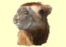 Свойства одеяла из верблюжьей шерсти