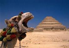 Верблюжий пух – удивительная нежность, эксклюзивный комфорт